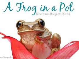 Frog in a Pot